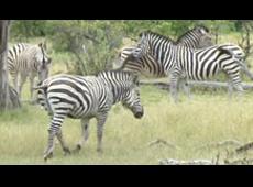 Okavango: Cradle of Life