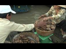 Vietnam's Floating World