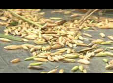 Vietnam's Rice Bowl